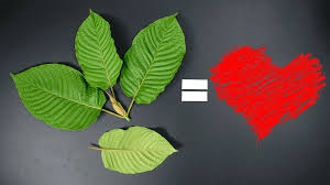 Red Bali Kratom: The Most Popular Variety that Customers are Interested in